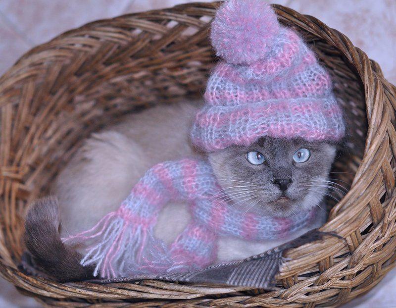 декабрь, зима Время зимних одежек...photo preview