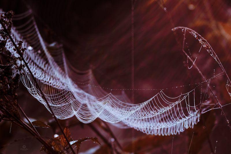 #spiderweb #macro #trioplan webphoto preview