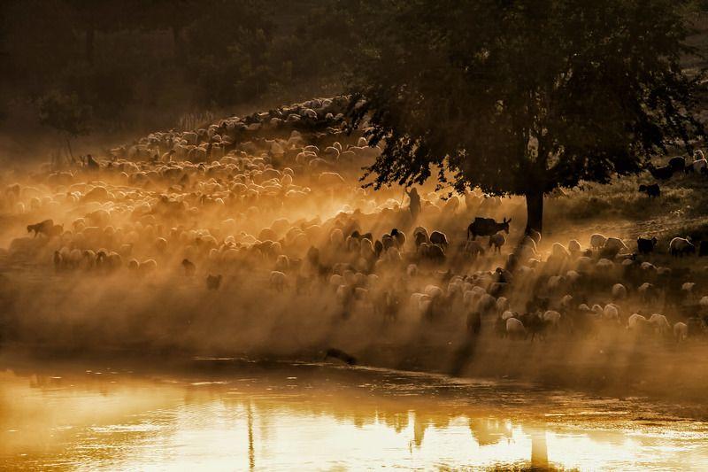 dicle batman,sürü,landscape,animal,river esekphoto preview