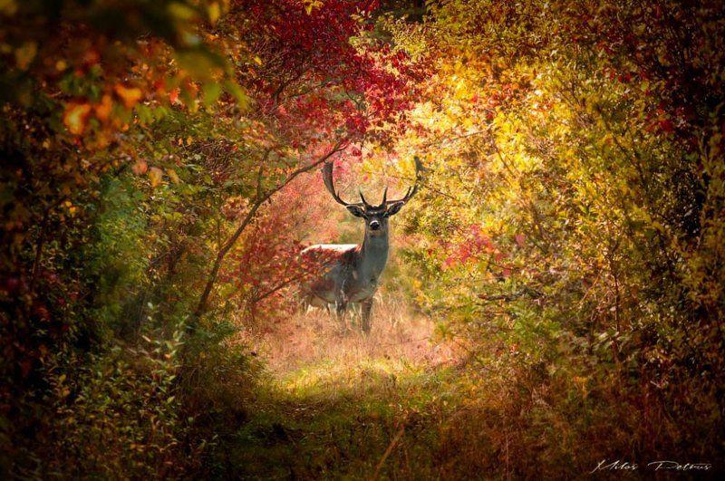 V jesenných farbáchphoto preview