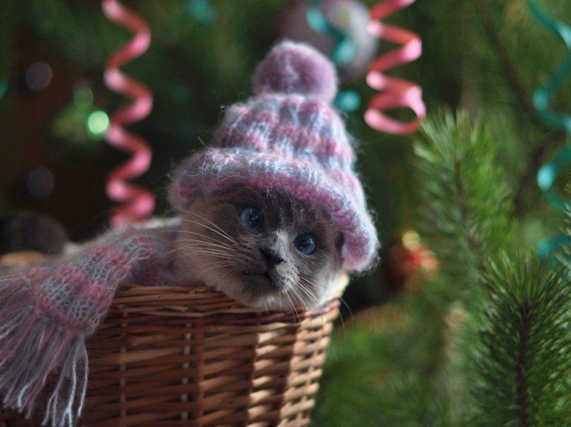 кошка, поздравление, сиамская, елка, праздник, новый год С наступающим Новым  годом!photo preview
