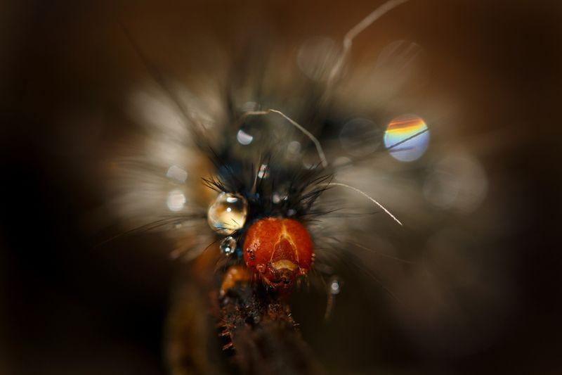 макро, гусеница Бусинка:)photo preview