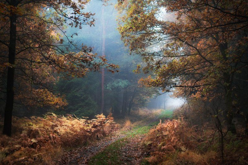 #forest, #woods, #autumn, #fall, #fog forestphoto preview