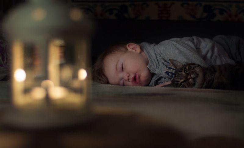 ребенок, мылыш, кот, детство, cat, children, childhood, baby Охранник снаphoto preview