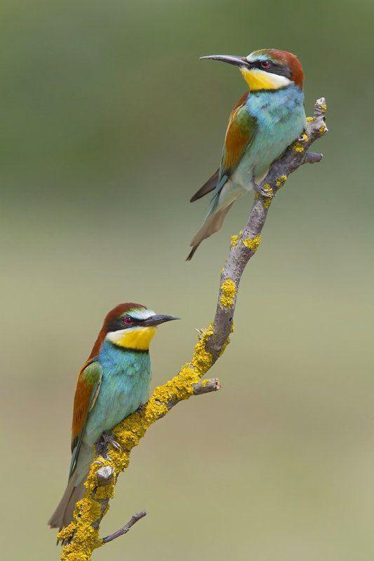 bird, wildlife, nature photography, animals, nature Wildlifephoto preview