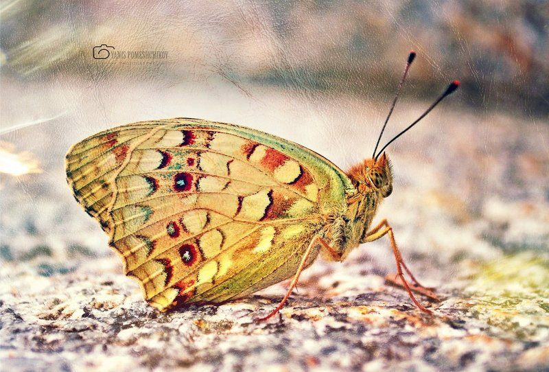 butterfly,nature,insects butterflyphoto preview