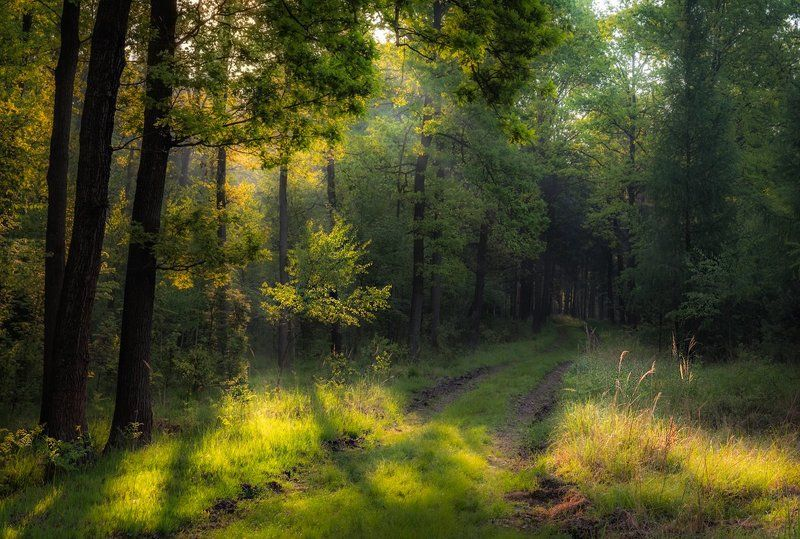 #forest #green #woods #leaves ***photo preview