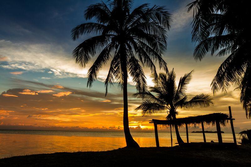 sunset, hawaiian, tree, palm, sea, hawaii, beach, water, vacation sunset, bahamas, tropical background, sunlight, bora bora, tropical sunset, sunset palms, island, coast, sunset palm trees, tropical, sunset sky, orange, summer, sunset beach, sun, sunset  Golden tropical sunset photo preview
