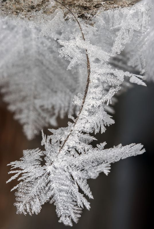 Зимние мотивыphoto preview