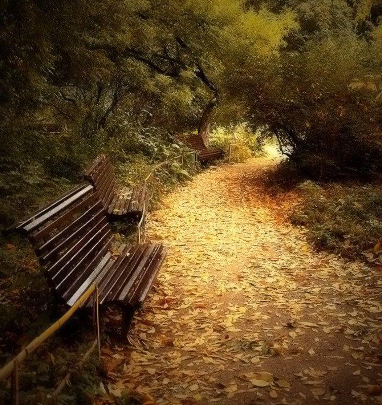 лето., осень Осень в середине лета.photo preview