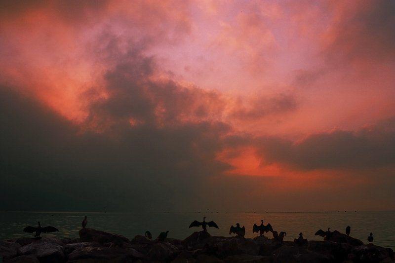 море, восход, птицы Рождение дняphoto preview