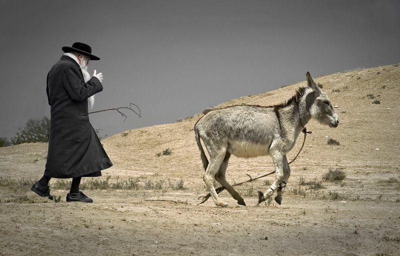 раби шимон, осел, пустыня, зоар Погонщик ословphoto preview