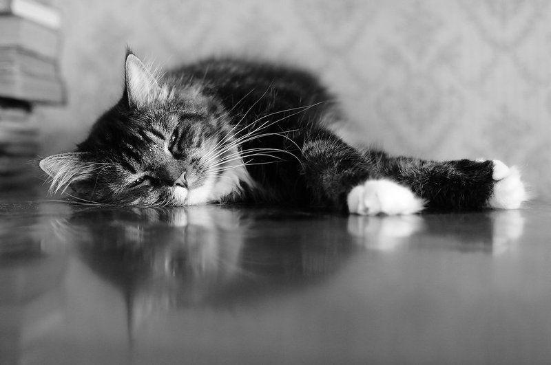 Коты-роялистыphoto preview