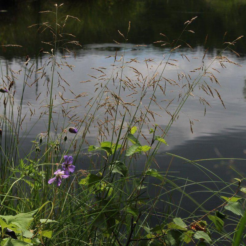 лето,озеро,олег кулаков */photo preview