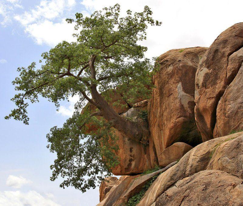 дерево, скалы, валуны Деревянный конформизмphoto preview