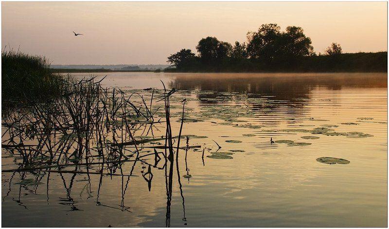 утро, рассвет, жизнь Однажды вдруг оказывается, что ты живой...photo preview