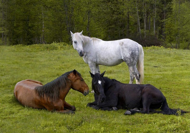лошади, масть Трилогия.photo preview