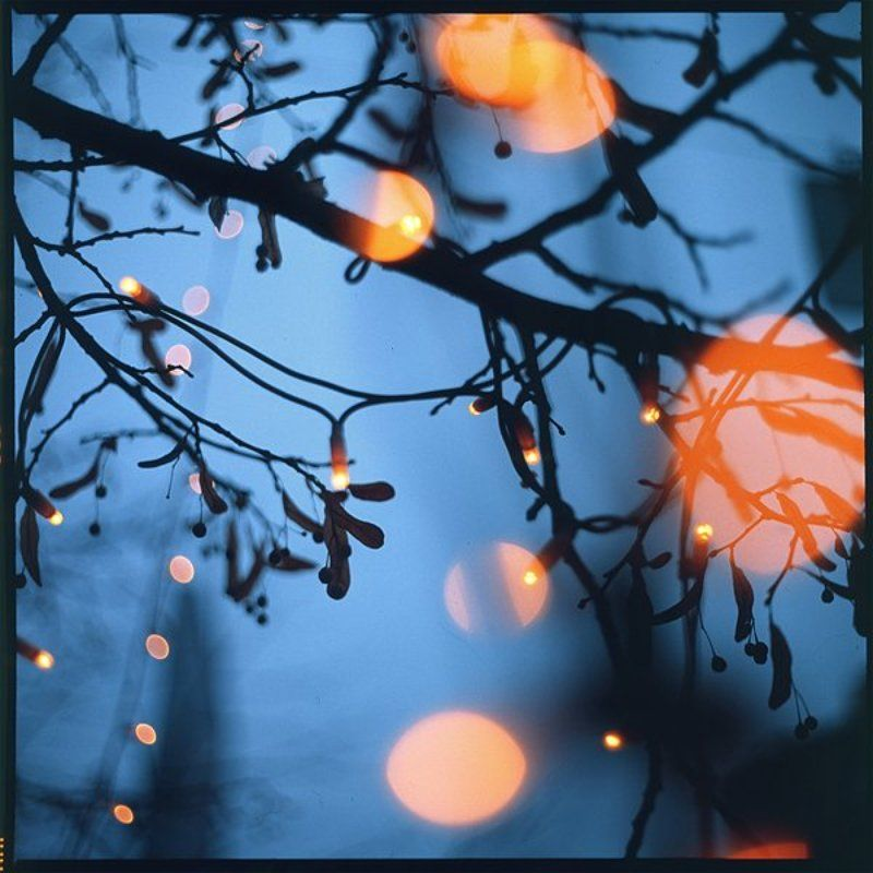film,6x6,bokeh,arsat,fuji firefliesphoto preview