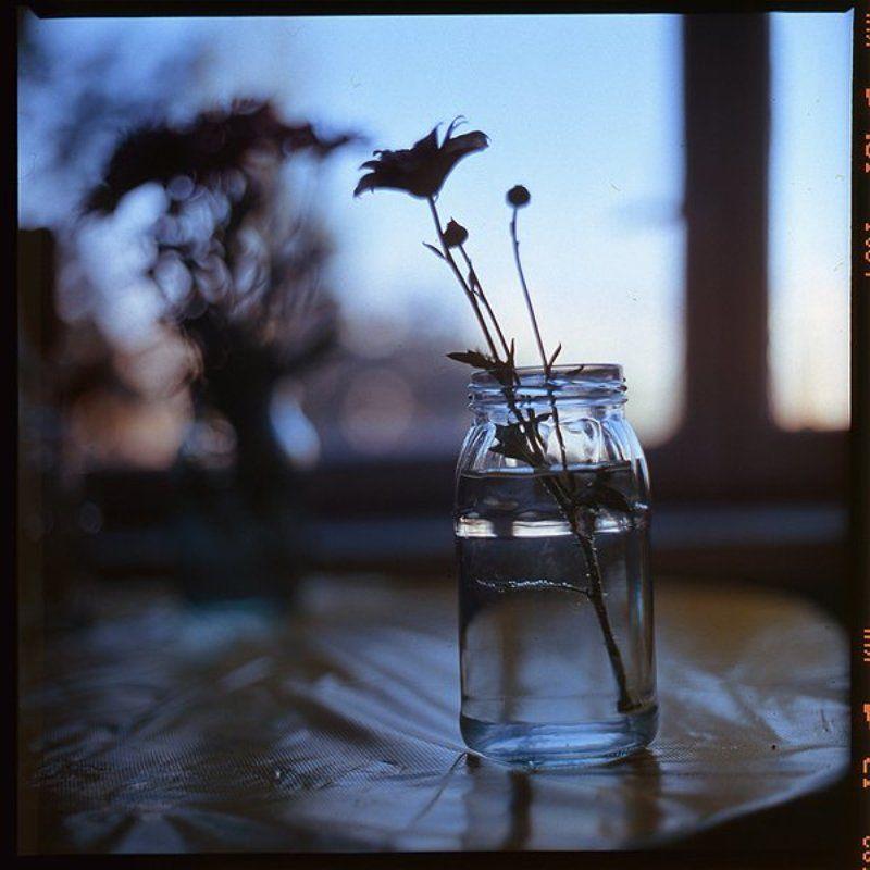 6x6,film,fuji,kiev88,flowers Wake up with mephoto preview