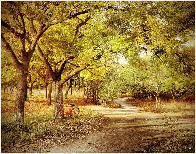 парк, велосипед, дорожка, осень Осенние прогулкиphoto preview