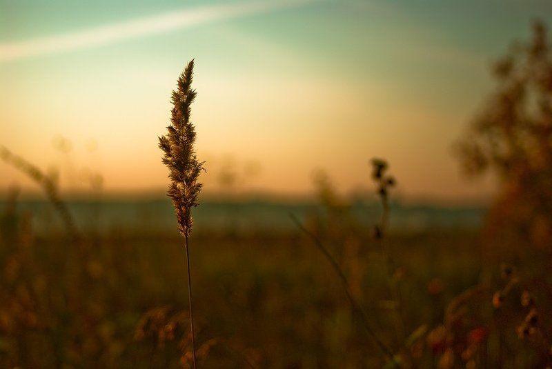 вечер, луг В ожидании закатаphoto preview