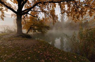 Под шатром из осенних листьев