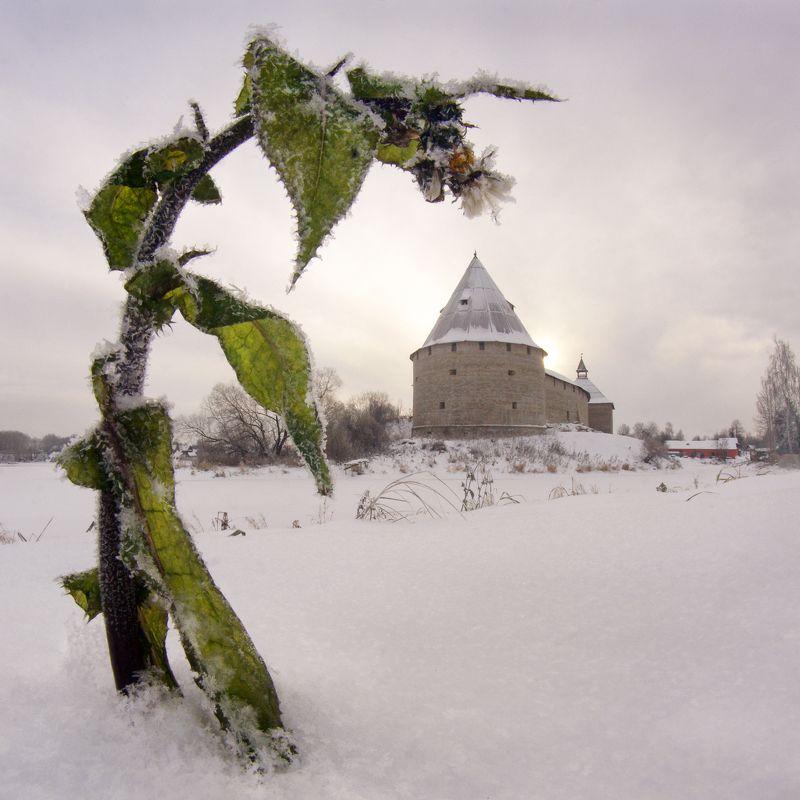 старая ладога, цветок, крепость, снег Старая Ладога, Первый снегphoto preview