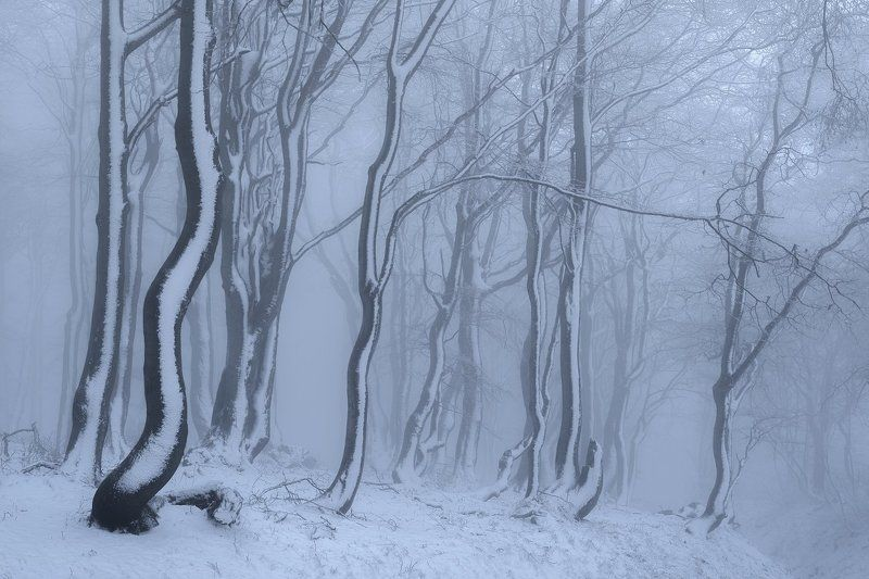 czech republic, ore mountains, winter, cold, frost, beeches,fog, mist, snow Winter in the Ore mountains.photo preview