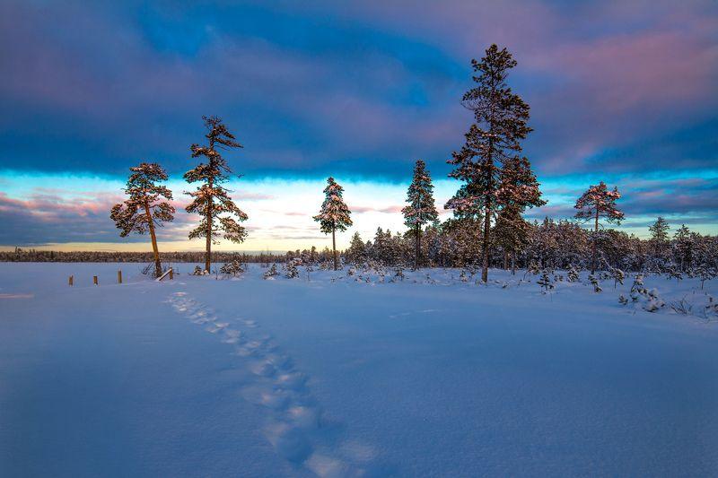 зима,  север, пейзаж, окунево, югра, На закатеphoto preview