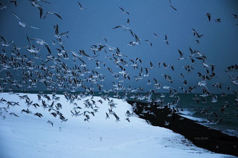 landscape, sea, winter, snow, seagulls, fling, seaside, frozen, cold, outside, Good Morningphoto preview