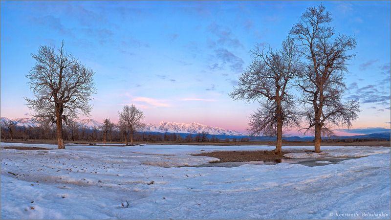 реликтовые тополя, курай, наледь, рассвет, алтай, весна Северный коэффициентphoto preview
