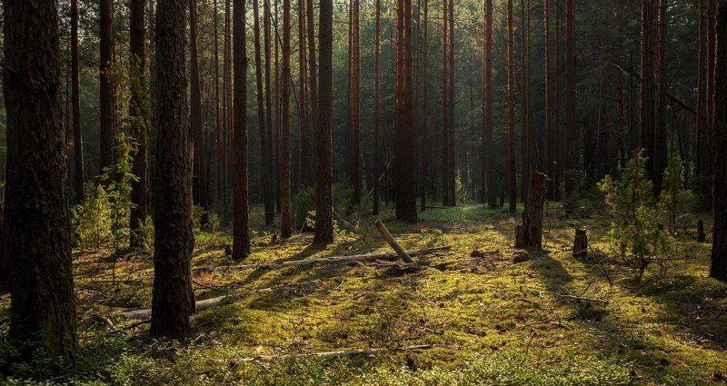 Тверь, Тверская область ---photo preview