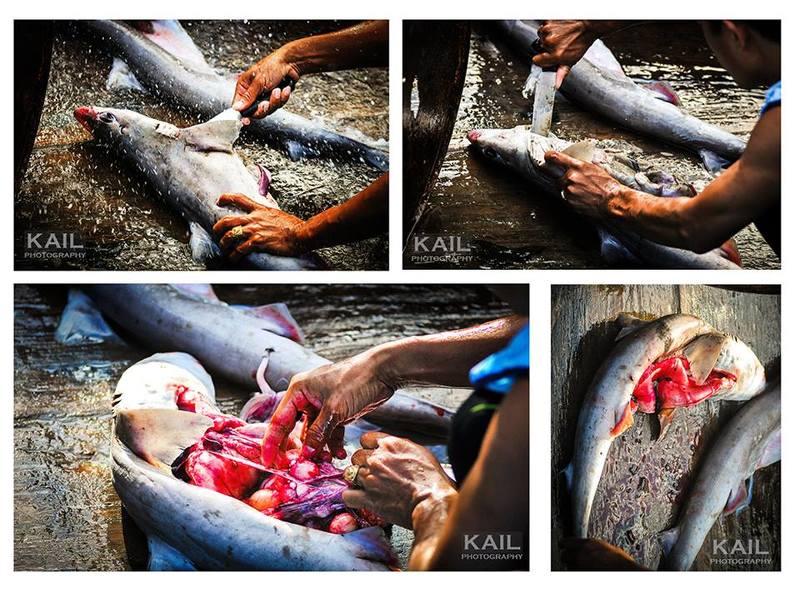 vietnam, shark, slayer, killing, blood, fish, market, ocean, protect, saving, savetheshark SHARK SLAYERphoto preview