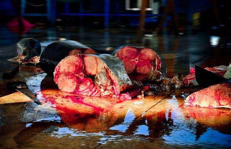 vietnam, shark, slayer, killing, blood, fish, market, ocean, protect, saving, savetheshark, fin, sharkfin, eyeballs, sharkeyeballs SHARK SLAYERphoto preview