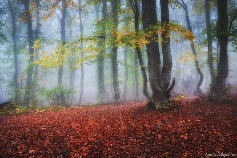 крым, демерджи, осень, лес, туман Осенняя мелодияphoto preview