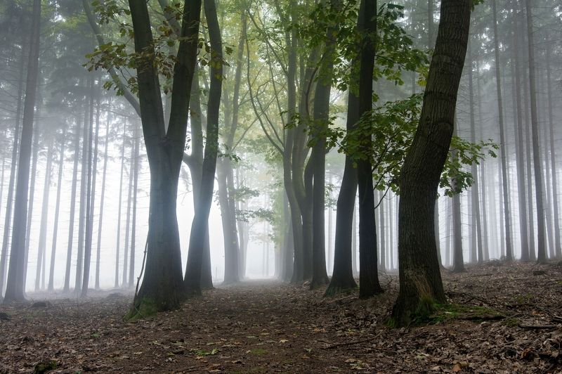 fog,mist,autumn,fall,morning,foggy,misty,nobody,forest,trees,way,road,nature,mysterious,fantasy, Foggy wayphoto preview