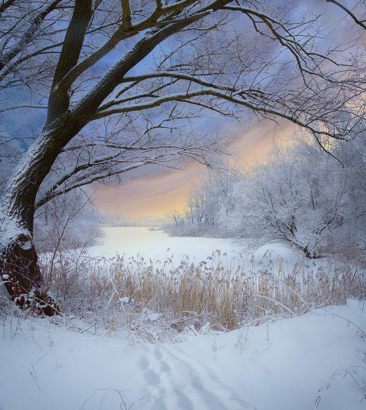 зима, снег, мороз, утро, озеро, дерево, куст,  Зимние пейзажи.photo preview