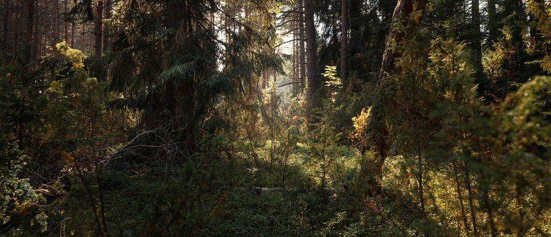 тверь, тверская область Лесной массивphoto preview