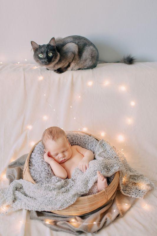 новорожденный ребенок мальчик малыш дети животное кот свет дом тепло уют глаза  ***photo preview