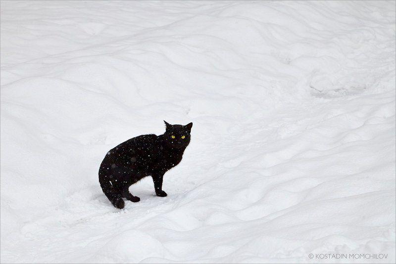 Црна мацаphoto preview
