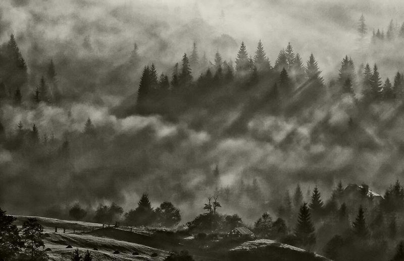 карпаты, осень, туман,утро, дземброня Туманная феерия...photo preview