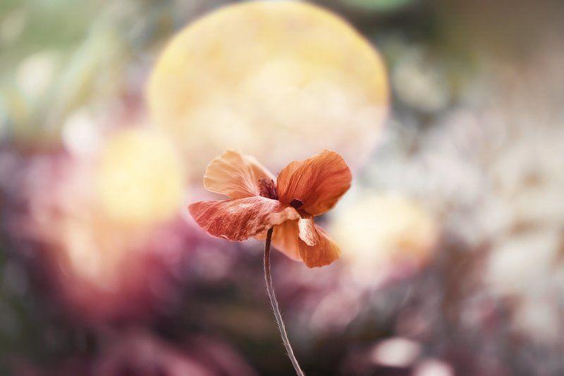 antrisolja,nature,mcro, В сердце каждого из нас photo preview