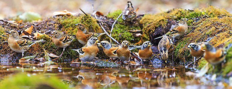 птицы, Осенние листьяphoto preview