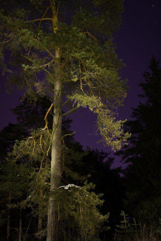 фото, Дубна, пейзаж, сосны, зима, ночь Ночные краскиphoto preview