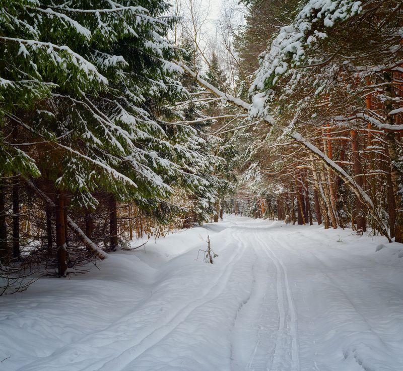 лес, природа, пейзаж Пргулка по лесуphoto preview