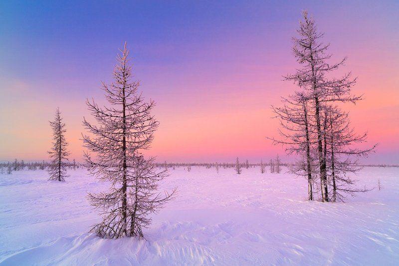 пейзаж зима север Северная зимняя закатнаяphoto preview