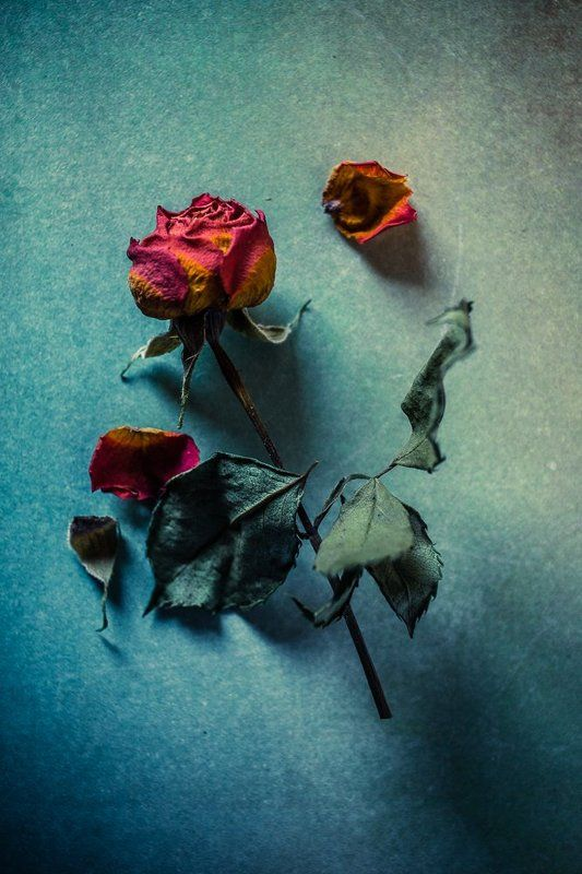 #still life #rose #old #texture timephoto preview
