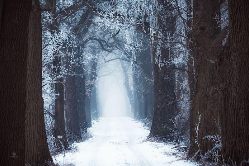 Winter invites youphoto preview