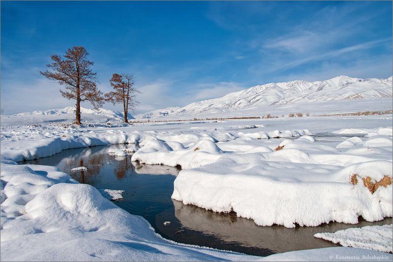 алтай, горы, курайский хребет, снег, чуйская степь, январь, ёкитыт Зимний Алтайphoto preview
