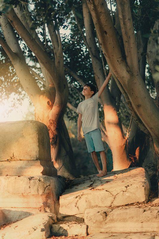 ребенок, мальчик, свет, закат, улица, дерево, корни, мечты, лето, отпуск ***photo preview